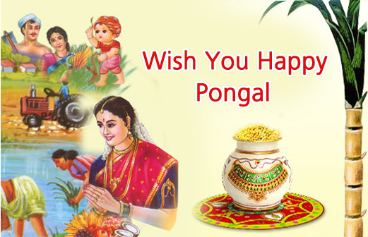 Pongal, Pongal Photos, Pongal Images, Pongal Wallpapers, Pongal Pictures, Pongal Graphics.