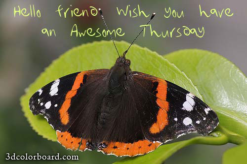 Wishes with Thursday Graphics, Thursday Greetings, Thursday Images, Thursday Photos and Pictures for Orkut, Facebook, other Social Network Websites.