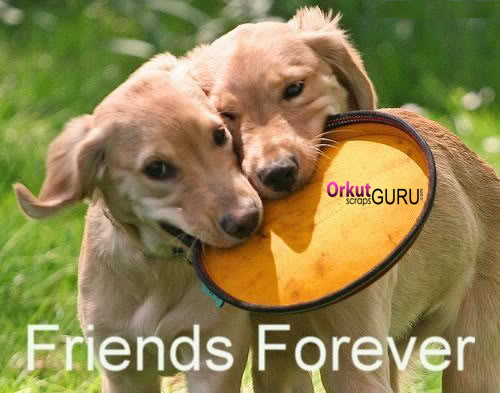 Wishes with Friends Forever Graphics, Friends Forever Greetings, Friends Forever Images, Friends Forever Photos and Pictures for Orkut, Facebook, other Social Network Websites.