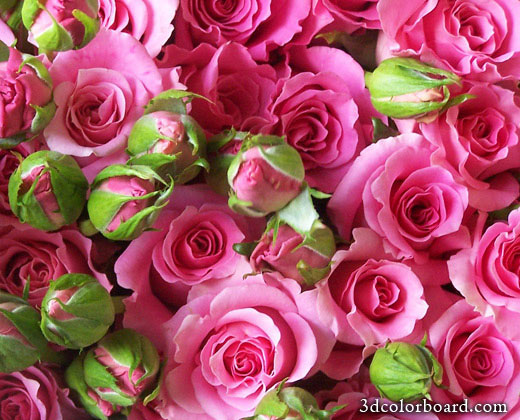 Wishes with Rose Day Graphics, Rose Day Greetings, Rose Day Images, Rose Day Photos and Pictures for Orkut, Facebook, other Social Network Websites.